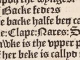 S. Seld. d.17, fol. a6v detail